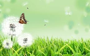 Wallpaper summer, grass, flowers, nature, background, butterfly, dandelions