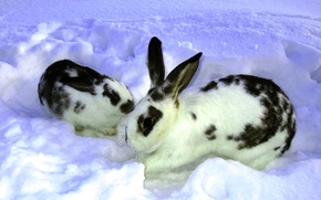 Picture winter, snow, Nature, rabbits, the snow, two, rabbit, rabbit, butterfly.