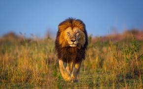 Picture Leo, Africa, walk, Kenya