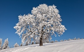 Picture winter, frost, the sky, snow, tree, horizon, frost
