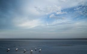 Picture sea, the sky, birds