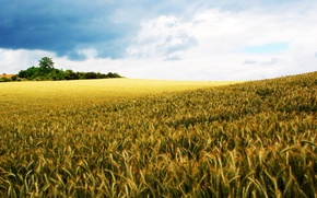 Wallpaper the world, the sky, field, rye, nature