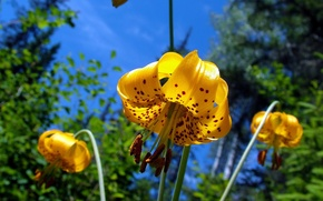 Picture colors, nature, yellow, flowers