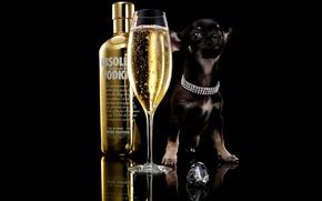 Wallpaper Dog, Glass, Absolute