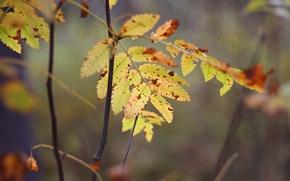 Wallpaper macro, yellow, autumn, leaves