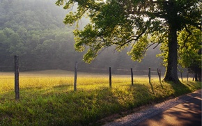 Picture road, grass, the sun, rays, nature, fog, tree, dawn, the fence