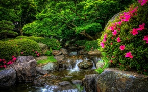Wallpaper forest, flowers, nature, Park, river, stones, forest, river, nature, Park, flowers, stones