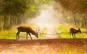 Picture trees, birds, fog, deer, path