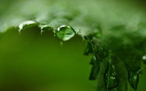 Wallpaper sheet, greens, drops