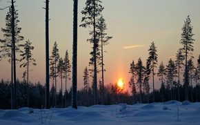 Picture the evening, snow, winter, trees, forest, sunset