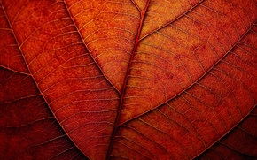 Picture autumn, sheet, texture, red