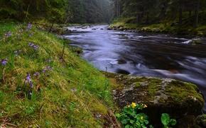 Picture forest, summer, river, Czech Republic, Sumava