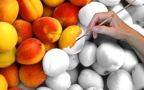 Picture hand, peaches, brush