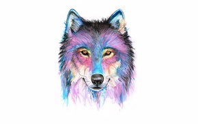 Picture face, paint, wolf, wolf