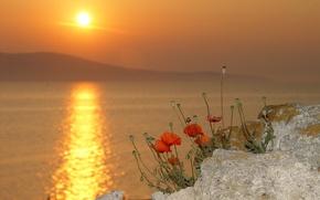 Picture the sun, flowers, nature, lake, Maki