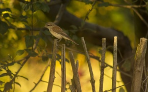 Picture yellow, green, background, bird, Wallpaper, the fence, bokeh