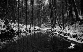 Wallpaper black and white, pond, forest, winter