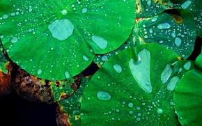 Wallpaper sheet, water, drops