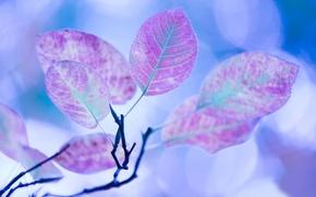 Wallpaper autumn, leaves, color, macro, light, glare, treatment, branch