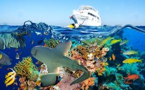 Picture fish, sea, corals, shark, yacht, underwater world