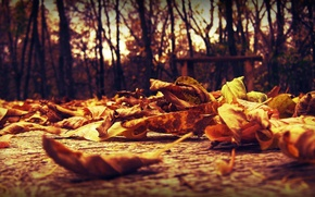 Picture autumn, leaves, macro