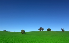Picture field, the sky, trees