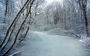 Picture ice, frost, trees, river, Winter