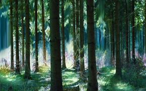 Picture forest, summer, trees, magic