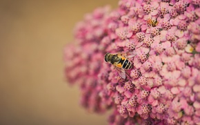 Picture flowers, bee, background, blur