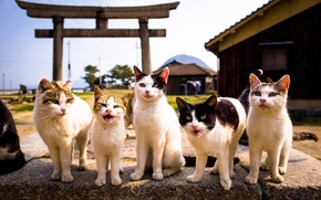 Picture look, background, cats, Kote