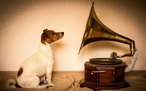 Picture dog, gramophone, Jack Russell Terrier