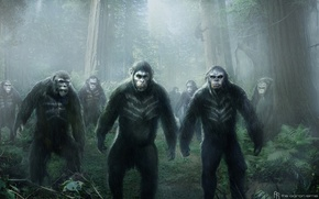 Picture monkey, Caesar, Caesar, Planet of the apes: the Revolution, Dawn of the Planet of the …