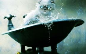 Picture cat, bath, art, bathing, vacuumslayer, squirt, wet, Kote, duck, cat