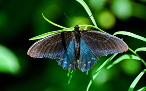Picture grass, butterfly, insect, butterfly