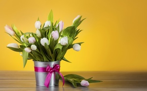 Picture flowers, bucket, tulips, white, bow