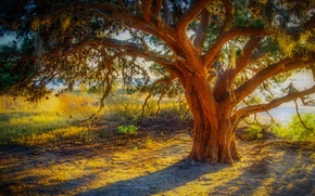 Picture grass, sunset, branches, tree, hdr, trunk