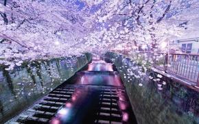 Wallpaper lights, river, trees