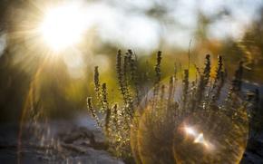 Wallpaper grass, light, nature