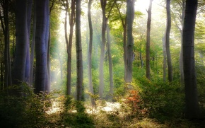 Picture forest, leaves, light, trees, nature, foliage, green, the bushes