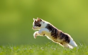 Wallpaper grass, jump, kitty