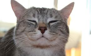 Picture Cat, meow, murrr