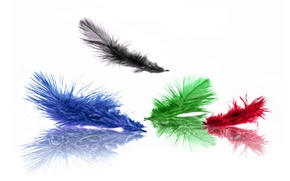 Picture blue, red, green, black, color, feathers