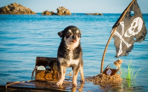 Picture sea, bottle, dog, flag, pirate, captain, chest, treasures, Chihuahua, the raft, swimming, doggie, Jolly Roger, …