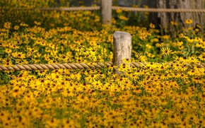 Picture flowers, fence, garden