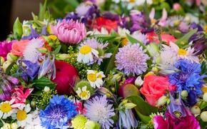 Wallpaper rose, bouquet, Daisy, colorful, carnation, cornflower