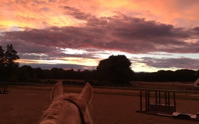 Picture The sky, The evening, Horse
