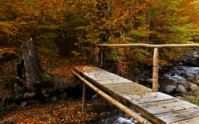 Picture autumn, forest, leaves, trees, stream, stones, yellow, the bridge