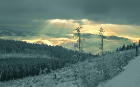 Picture forest, rays, snow