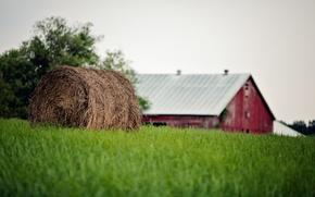 Picture summer, grass, bale, straw, farm