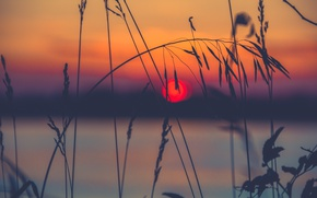 Wallpaper sunset, a blade of grass, grass, the sun, nature, spike, macro